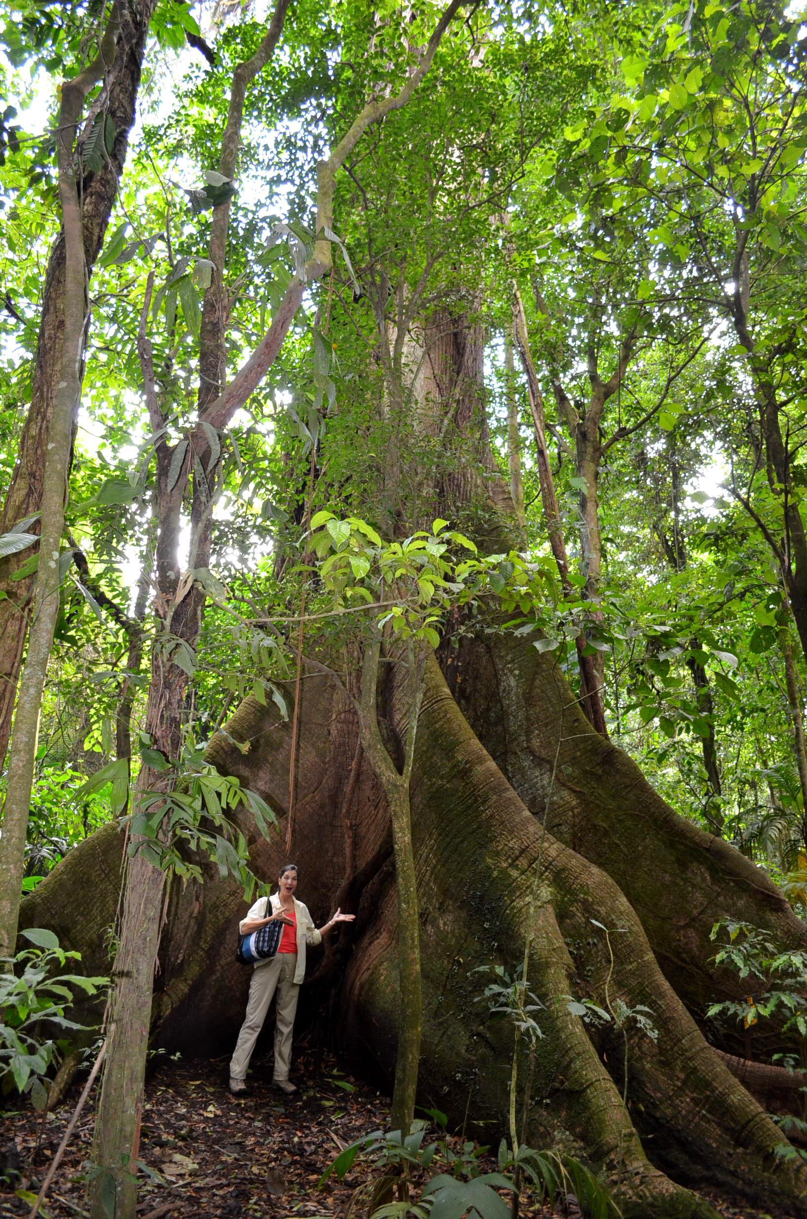 tree identification mark of sundari tree Red alder tree tags smooth alder tree tags arborvitae tree tags black ash tree tags blue ash tree tags red ash tree tags white ash tree tags bigtooth aspen tags.