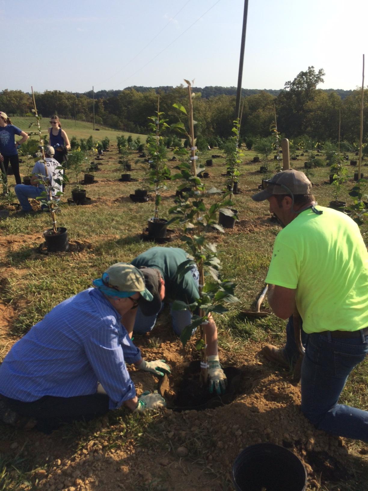 Planting At The Casey Trees Farm Treestewards Org